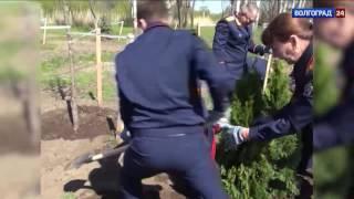 На Мамаевом кургане сотрудники Следственного комитета высадили деревья
