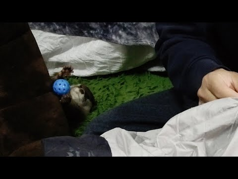 While I Was Repairing Camping Equipment ... [Otter Life Day 217]