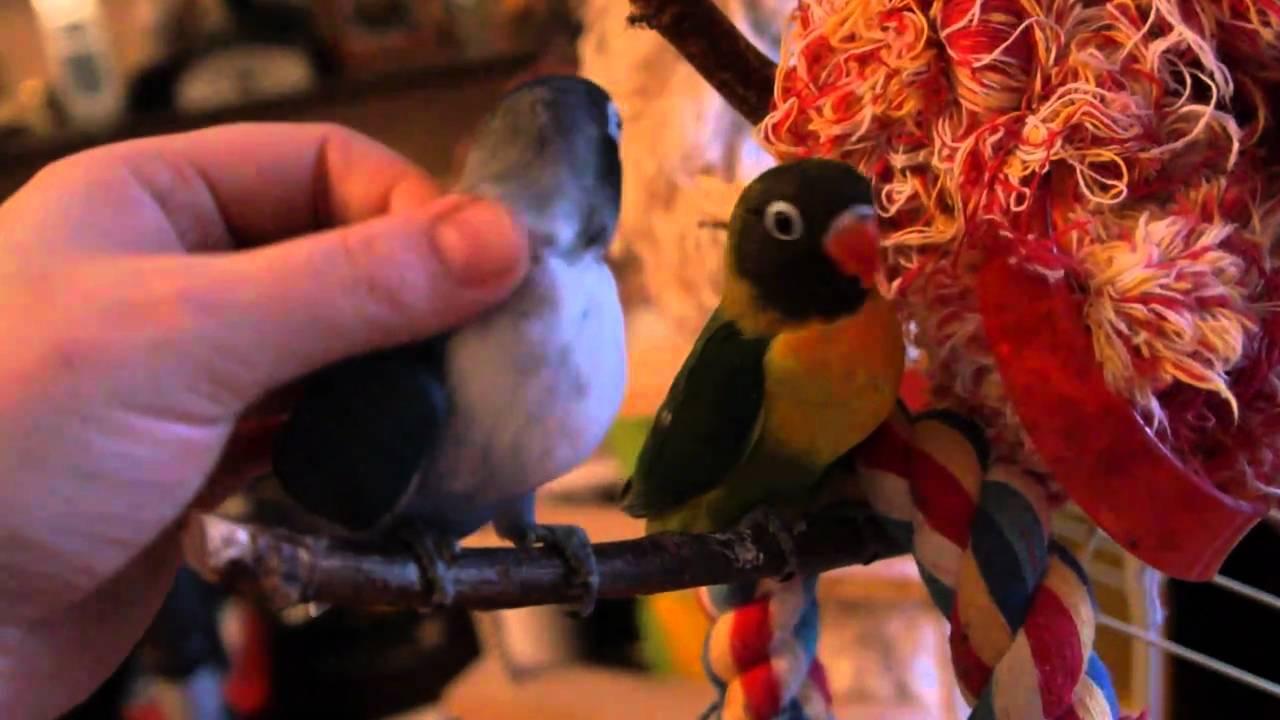 Где купить здорового попугая?.wmv - YouTube