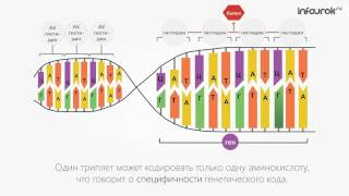 Биосинтез белка в клетке