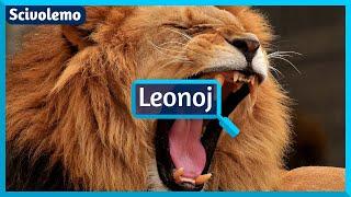 Endanĝerigitaj leonpopulacioj