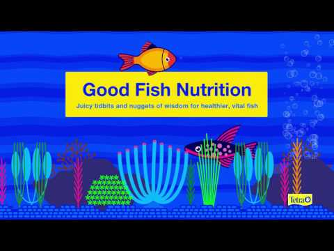 GOOD FISH NUTRITION — Juicy Tidbits And Nuggets Of Wisdom For Healthier, Vital Fish From Tetra®