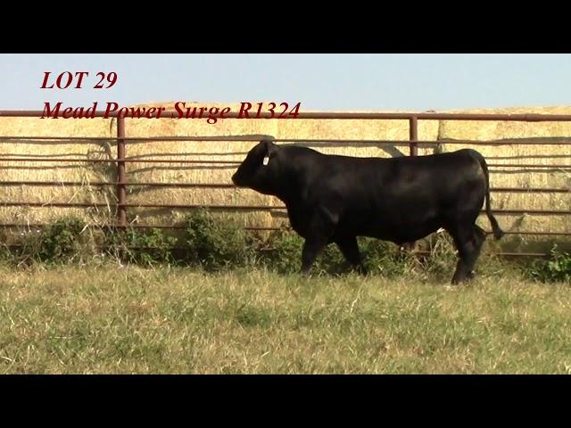 Mead Angus Lot 29