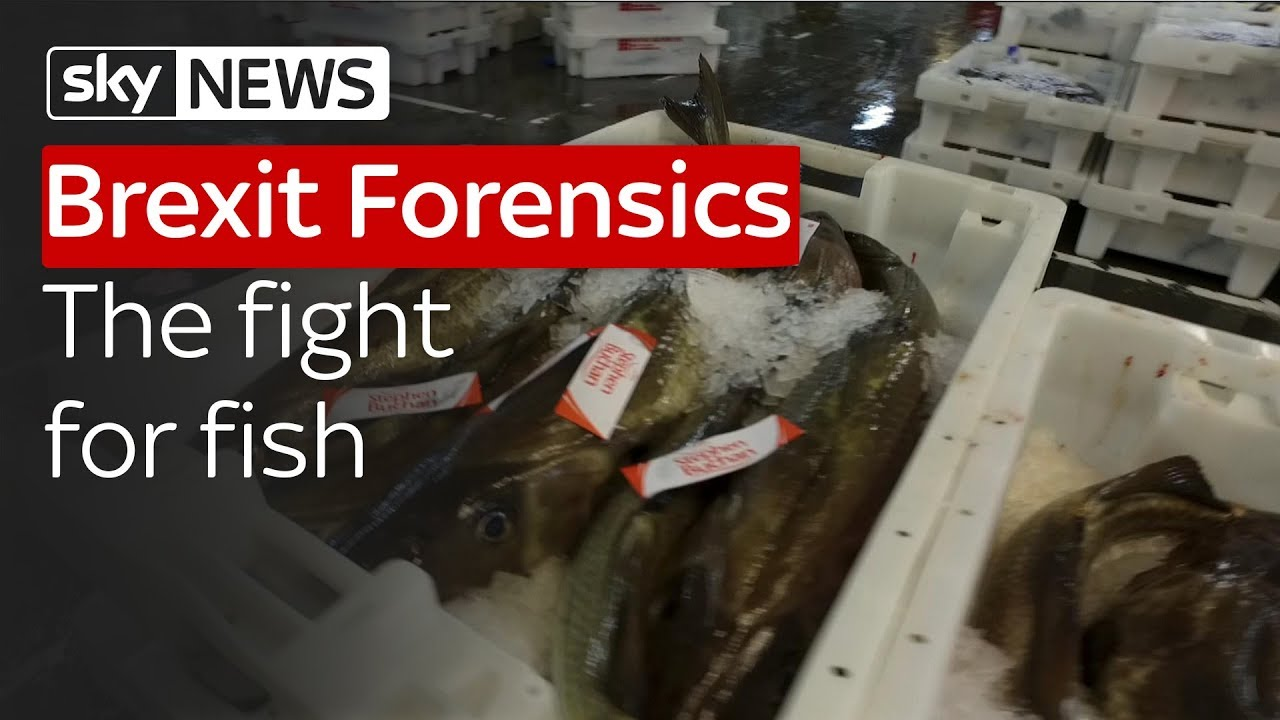 Brexit Forensics: The Fight for Fish