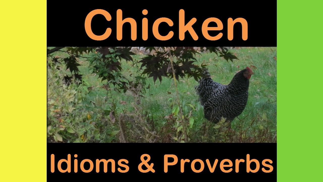 Chicken Phrases: Chicken Idioms & Proverbs
