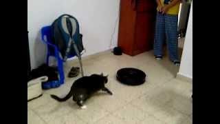 Кот и робот пылесос (первая реакция) iRobot