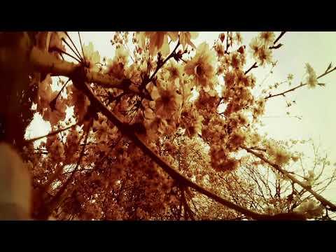 "LEILA ABDUL RAUF ""Hindsight"" Official Video"