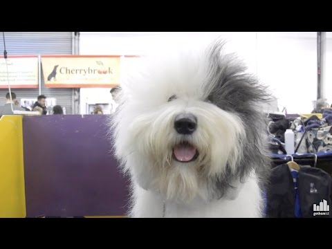 Thumbnail: Inside the Westminster Dog Show