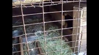 Кролики дома