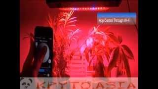 LED свет для растений 240W, UV, управление по Wi-Fi(https://kpyto.asia/svetovye-ustroystva/945-led-svet-dlja-rasteniy-240w-uv-upravlenie-po-wi-fi.html Панель для освещения прекрасно подходит для всех..., 2015-01-06T09:40:05.000Z)