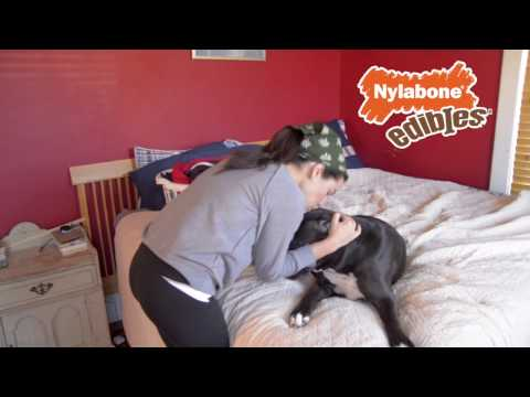 """""""thanks,-girl!""""-by-nylabone®-healthy-edibles®-chew-treats-for-dogs"""