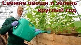 Свежие овощи и зелень круглый год(http://krestynin.ru Посмотрев это видео вы узнаете как выращивать свежие овощи и зелень круглый год Покупайте..., 2015-06-09T05:15:40.000Z)