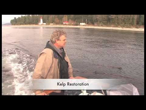 Kelp Restoration ~ with Rob Saunders