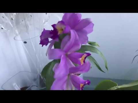 Орхидеи на продажу из моей коллекции /по Украине/
