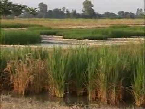 Living Labs: Indo-Gangetic River Basin