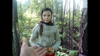 видео Опята где собирать / маринованные опята рецепт / Красивая тайга