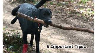 Train Your Dog - 6 Important Dog Training Tips For Obedience Training