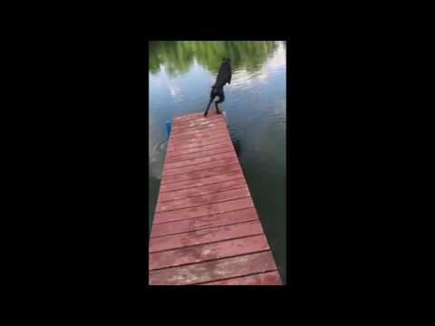 Jay The Doberman Jumping Of The Dock - Slow Motion Dog Jump
