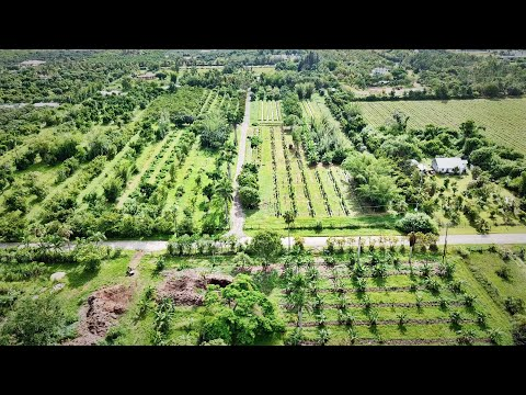 Check Out This 15-Acre Organic Tropical Fruit Operation!
