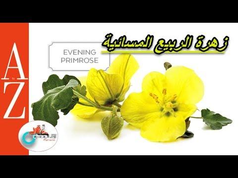 Evening Primrose  From A To Z  زيت زهرة الربيع المسائية   فوائد واستخدامات ومحاذير   كل أربعاء