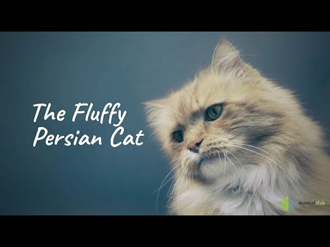 The Fluffy Persian Cat