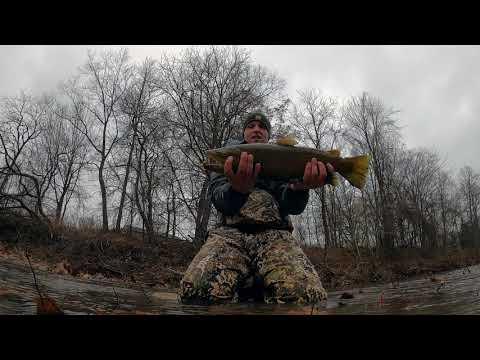 Steelhead Fishing SLAM Plus Big Brown Trout: Lake Erie Trib
