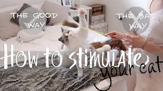 How to play with your cat the CORRECT way | Ragdolls Pixie and Bluebell