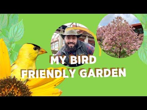 my-bird-friendly-garden:-joe-pye-weed
