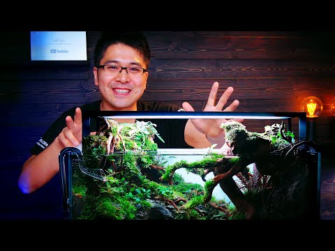 tokyo-aquascaping-union-showcase---steven-chong-60p-planted-tank-build