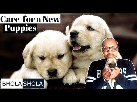 Pet Care - How to Care for a New Puppy - Bhola Shola