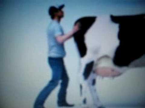 carl s jr cow youtube