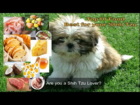 Top 10 Food | Best For Your Shih Tzu Dogs | TLT Tips