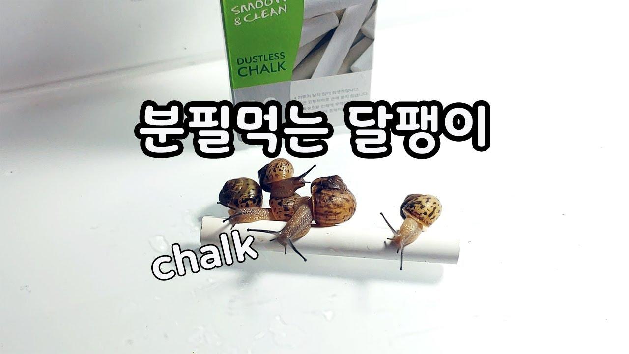 달팽이가 분필을 먹는 이유 [오브리더]