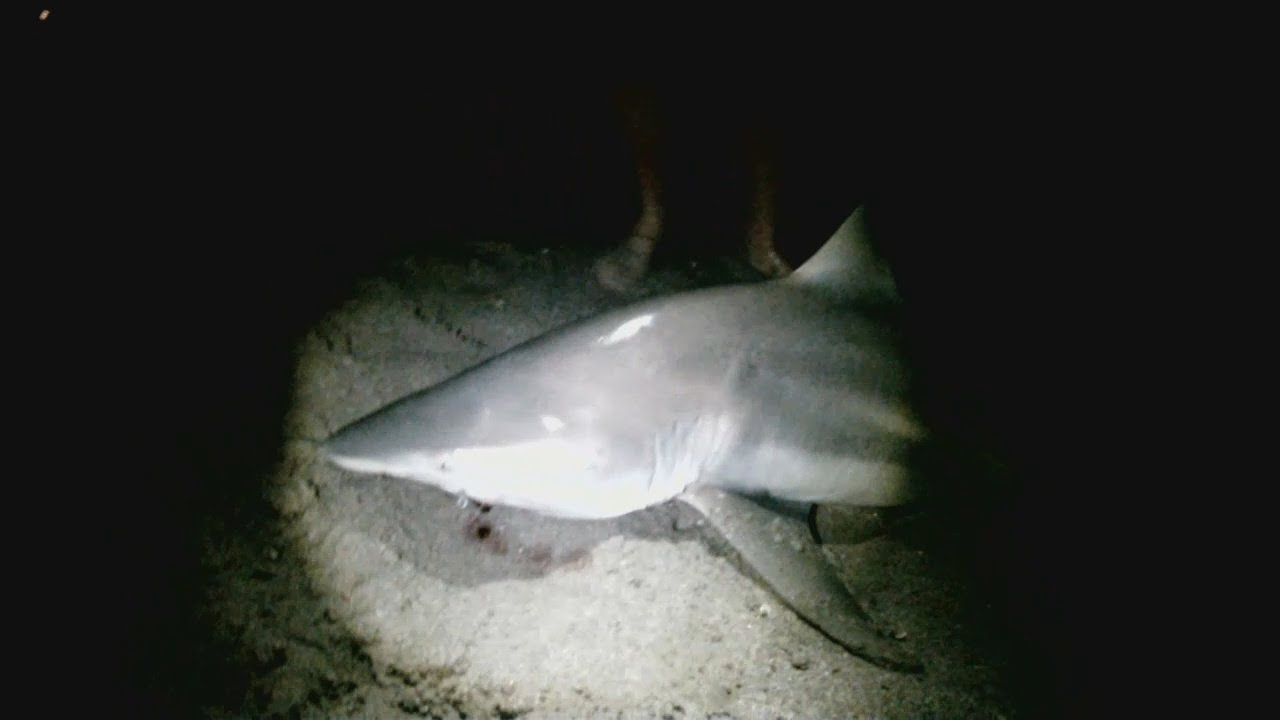 Beach Shark Fishing At Night