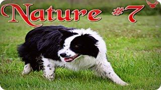 Nature #7  Собака в замедленной съемке  Животные  Природа  Красивое видео  Animal videos