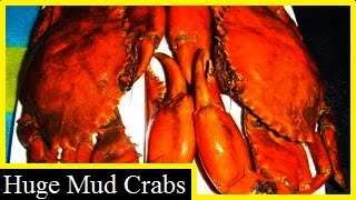 big delicious crabs how to catch cook and eat them