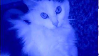 Кошка | Большие глаза