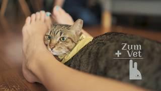 ZumVet - Mel the grandma cat