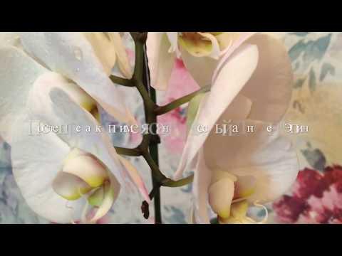 Цветущая Орхидея. Нужна ли Пересадка После Покупки?