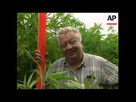 GERMANY: INCREASE IN PRODUCTION OF VERSATILE HEMP PLANT