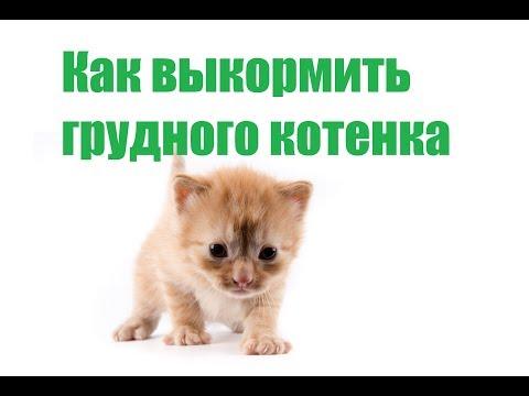 Как Выкормить Грудного Котенка Без Кошки & Как Ухаживать За Грудным Котенком. Ветклиника Био-Вет