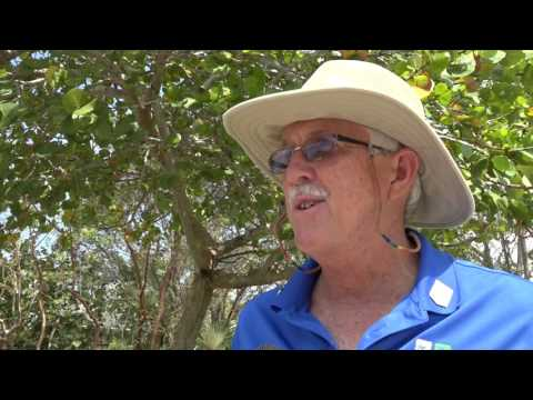Radio Cayman Party, Grand Cayman Cayman Islands