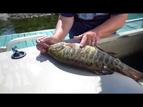 Fizzing smallmouth bass the proper way