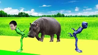 учить животных для малышей - животные для детей - видео развивающее #34