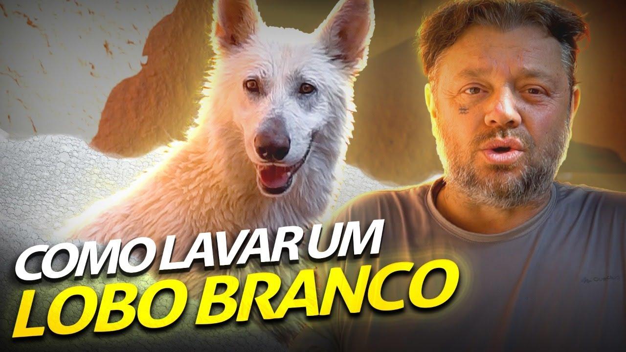 DANDO UM BANHO NO PASTOR BRANCO!   A CASA DOS BICHOS
