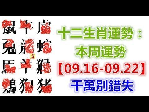 十二生肖運勢:本周運勢【09.16-09.22】千萬別錯失! - 十二生肖