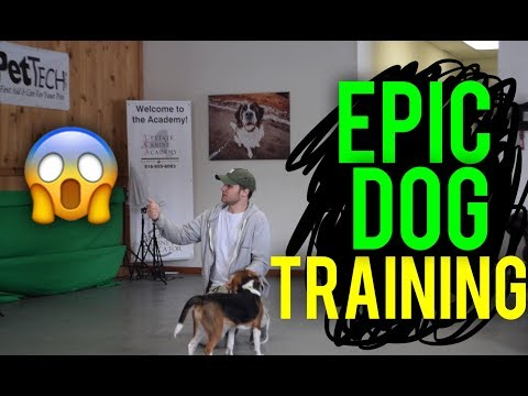Life Changing Dog Training with America's Canine Educator