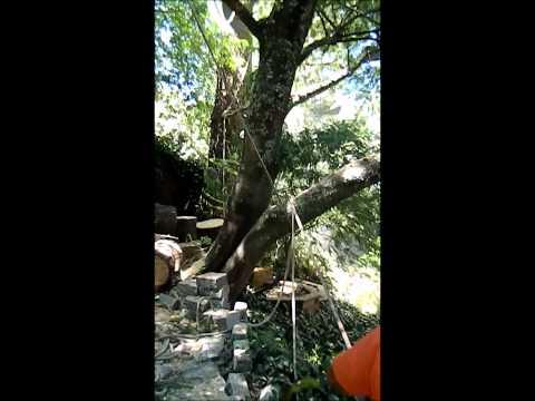 Santiago the Tree Whisperer
