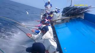Amazing Tuna Fast  Fishing Skill, Catching Big Fish on The Sea