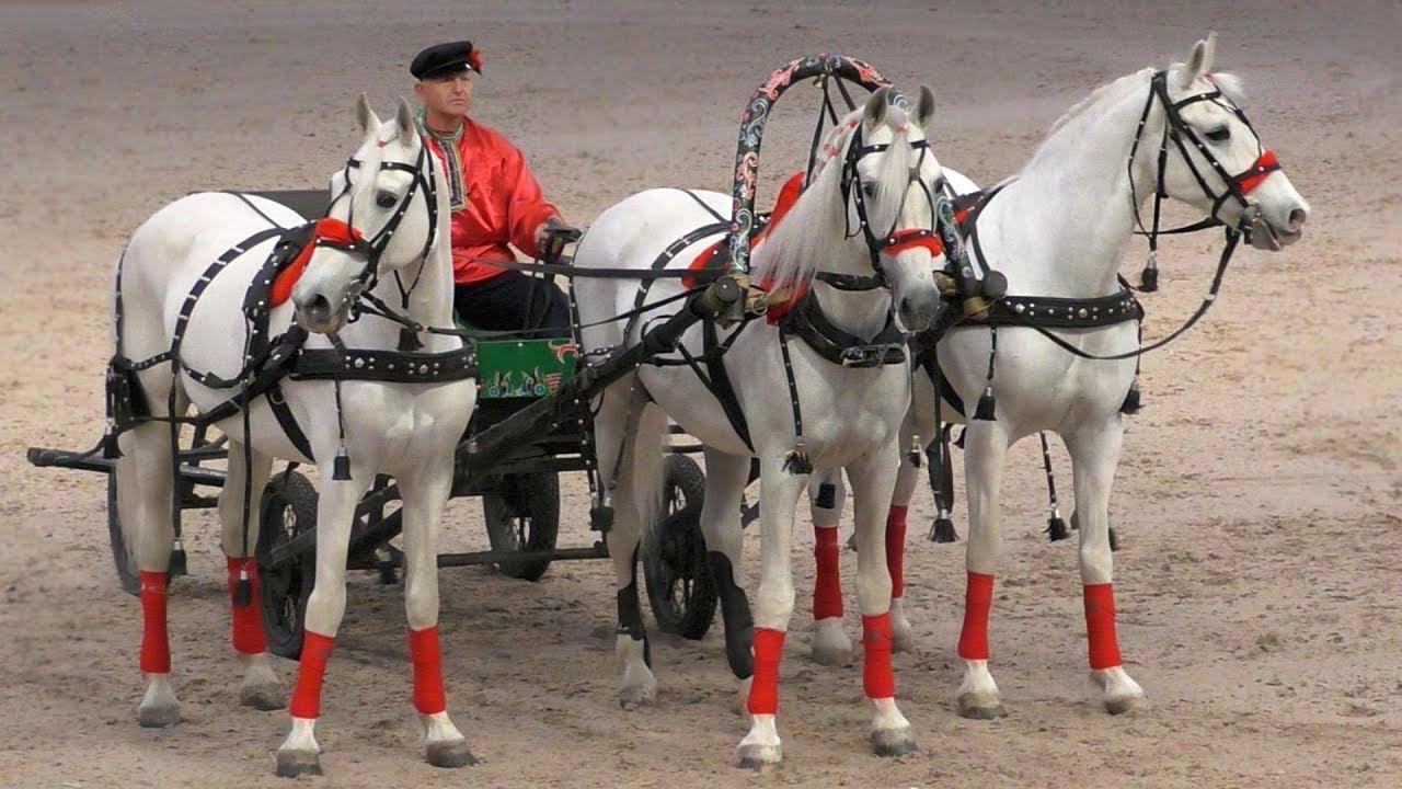 Русская тройка, орловские рысаки #ИППОсфера 2019 церемония открытия. Международная конная выставка